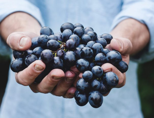 Vancouver wine tours - grapes